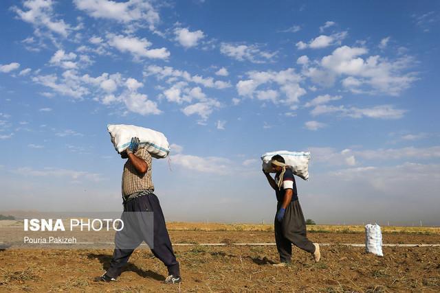 کشاورزان مهاجر بلای جان منابع آب کرمانشاه هستند