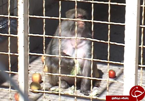 سازمان محیط زیست تصمیمی درباره تعطیلی باغ وحش ها نگرفته است
