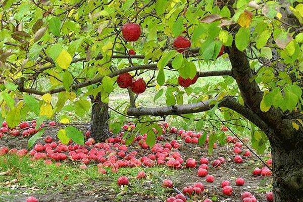 لذت گردشگری روستایی در حوالی پایتخت، کوچه باغ هایی که طعم سیب دارد