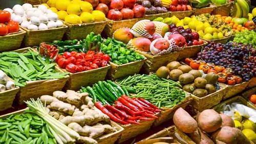 صادرات گیاهان اصلاح ژنتیکی به آذربایجان ، شرکت های دانش بنیان از دولت انتظارات مادی ندارند