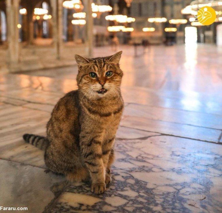 (تصاویر) مرگ گربه مشهور ایاصوفیه و تسلیت استاندار استانبول