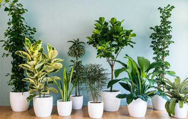 14 گیاه آپارتمانی که در خانه های کم نور دوام می آورند